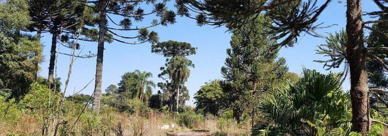Estudo de Impacto de Vizinhança Parque Bom Retiro